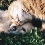 Dreams About Animals – Interpretation and Meaning