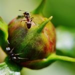 Dreams About Ants – Interpretation and Meaning
