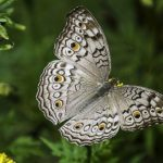 Dreams About Butterflies – Interpretation and Meaning