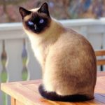 Dreams About Cats – Intrpretation and Meaning