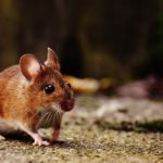 Dreams about Mice, Mouse – Interpretation and Meaning